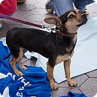 Adopt A Pet :: Aspen - Santa Monica, CA