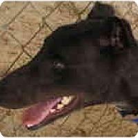 Adopt A Pet :: Al - St Petersburg, FL