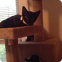 Adopt A Pet :: .Tina Turner - Baltimore, MD