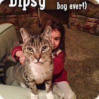Adopt A Pet :: Dipsy - Merrifield, VA