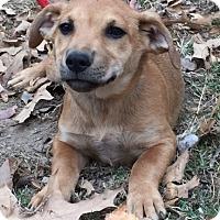 Adopt A Pet :: MALCOLM - in Sheboygan - Pewaukee, WI