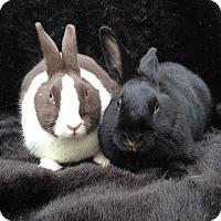 Adopt A Pet :: Athena & Atticus - Watauga, TX