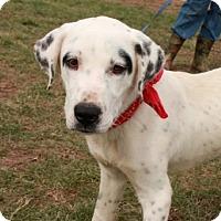 Adopt A Pet :: Petey - Salem, NH