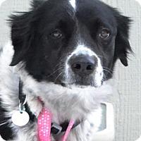 Adopt A Pet :: Holly - Bellevue, NE
