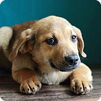 Adopt A Pet :: Cooper - Waldorf, MD