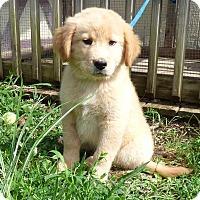 Adopt A Pet :: Deklyn - Bedminster, NJ