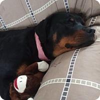 Adopt A Pet :: Mika - Laurel, MT