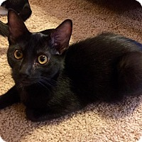 Adopt A Pet :: Vito - Edmond, OK