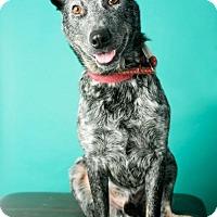 Adopt A Pet :: D'Jango - Roanoke, VA