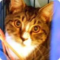 Adopt A Pet :: Cal - Parkton, NC