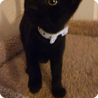 Adopt A Pet :: Grimm - Glendale, AZ
