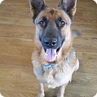 German Shepherd Dog Dog for adoption in Litchfield Park, Arizona - Mustang - Only $95 adoption!!!