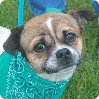 Adopt A Pet :: Jackson-PENDING - Garfield Heights, OH