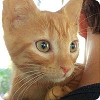 Adopt A Pet :: Ira - Clarkson, KY