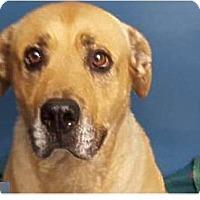 Adopt A Pet :: Sunshine - Springdale, AR