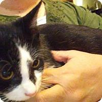 Adopt A Pet :: Mia - Columbus, OH