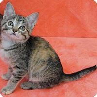 Adopt A Pet :: Tawny - Elkhorn, WI