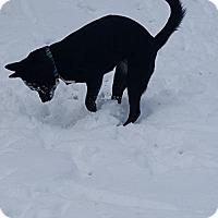 Adopt A Pet :: Bubbles - Lewistown, PA