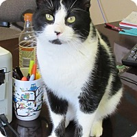 Adopt A Pet :: Figaro - Glenwood, MN