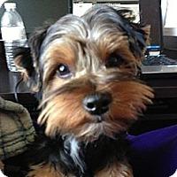Adopt A Pet :: Max - Minnetonka, MN