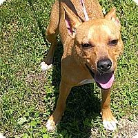 Adopt A Pet :: Squiggy - Berlin, CT