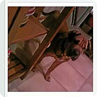 Adopt A Pet :: Gabreil