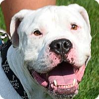 Adopt A Pet :: Brutus - Huntley, IL