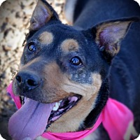 Adopt A Pet :: Cagney - Burleson, TX