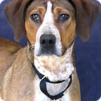 Beagle Mix Dog for adoption in Waukesha, Wisconsin - Daisy