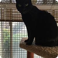 Adopt A Pet :: BEAUTY - Brea, CA