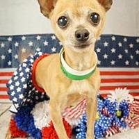 Adopt A Pet :: Feenie - Scottsdale, AZ
