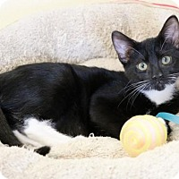 Adopt A Pet :: Venus - Mission Viejo, CA