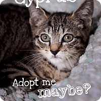 Adopt A Pet :: Cyprus - Jacksonville, FL