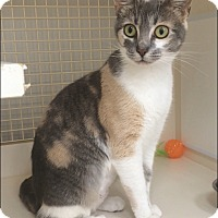 Adopt A Pet :: Sophie - Plainville, CT