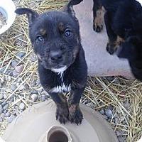 Adopt A Pet :: Hopper - Denver, CO