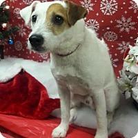 Adopt A Pet :: Murphy in Houston - Austin, TX