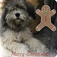 Adopt A Pet :: I'M ADOPTED Teddy Handfelt - Oswego, IL