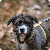 Adopt A Pet :: Juno - Jackson, TN