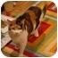 Photo 3 - Calico Cat for adoption in Muncie, Indiana - Sadie