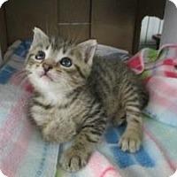 Adopt A Pet :: Stewie & Alvin - Island Park, NY