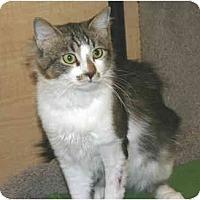 Adopt A Pet :: Jonesy - Irvine, CA