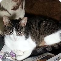 Adopt A Pet :: Chloe - Dewitt, MI
