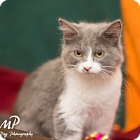 Adopt A Pet :: Lilly - Fountain Hills, AZ