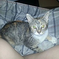 Adopt A Pet :: Cali- Courtesy Posting - Columbus, OH