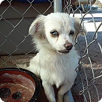 Adopt A Pet :: Piper - Creston, CA
