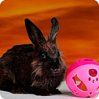 Adopt A Pet :: Aleta - Marietta, GA
