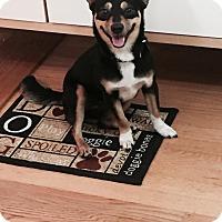 Adopt A Pet :: Bailey - Mahopac, NY
