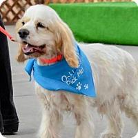 Adopt A Pet :: JuJu 11-075 - Parker, CO