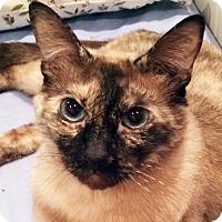 Adopt A Pet :: Zara - Irvine, CA