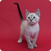 Adopt A Pet :: Princess - Garland, TX